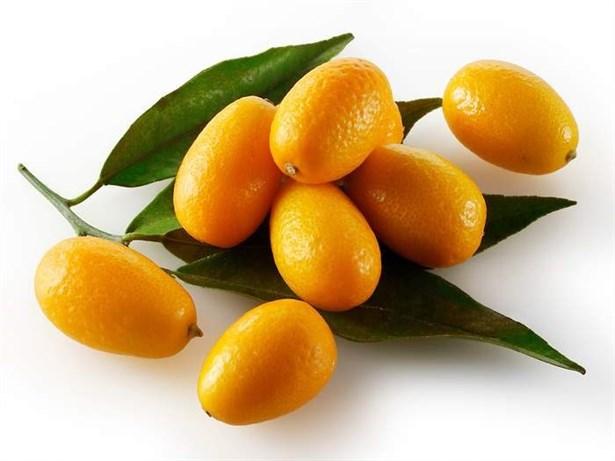 Şifa Kaynağı Kamkat Meyvesi